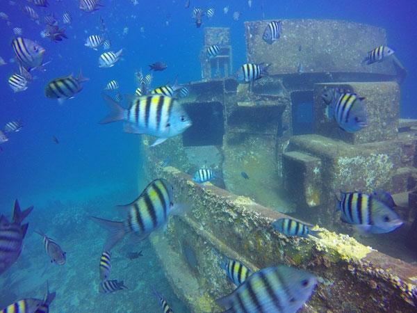 Scuba-Diving-Atlantic-Princess-coast-of-Bayahibe-600